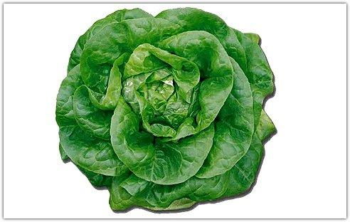 Баттерхед - салат