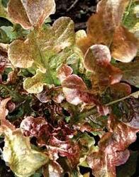 http://povarixa.ru/images/statyi/salads/06.jpg