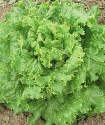 http://povarixa.ru/images/statyi/salads/16.jpg