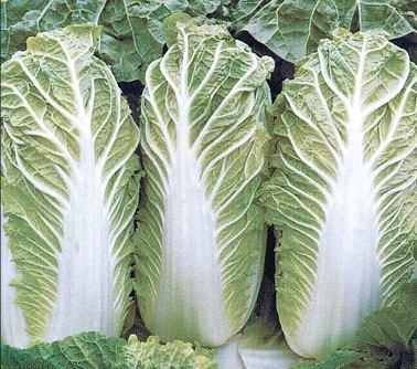 Пекинская капуста - салат