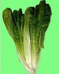 Ромэн - салат