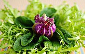 Зеленые салаты: виды, вкус, сочетания. Справочник.