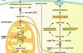 Формула метаболизма
