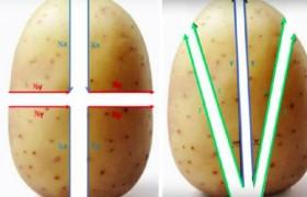 Студенты рассчитали идеальный рецепт запеченного картофеля
